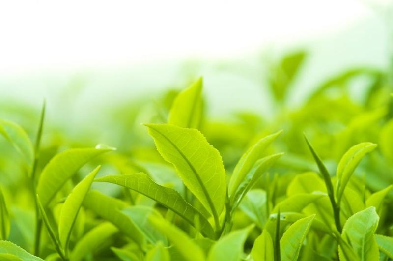 Private Label Green Tea Eye Cream, Contract Manufacturing Green Tea Eye Cream, Green Tea Eye Cream Contract Manufacturer, Green Tea Eye Cream OEM, Green Tea Eye Cream Custom