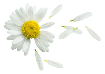 Chamomile Soothing Lotion